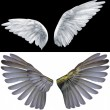 Two wings — Stock Photo #2476032