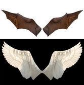 Dos alas — Foto de Stock
