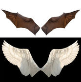 两个翅膀 — 图库照片