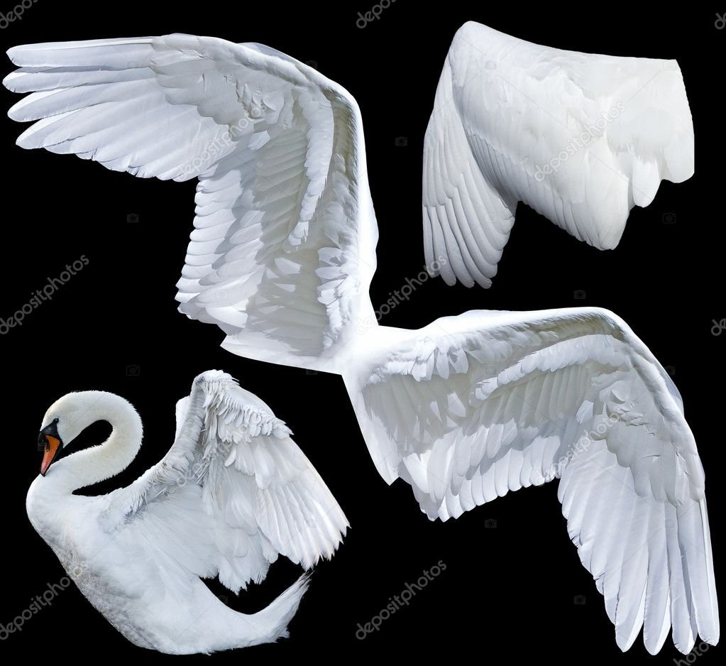 Two wings isolated — Stock Photo #2475998
