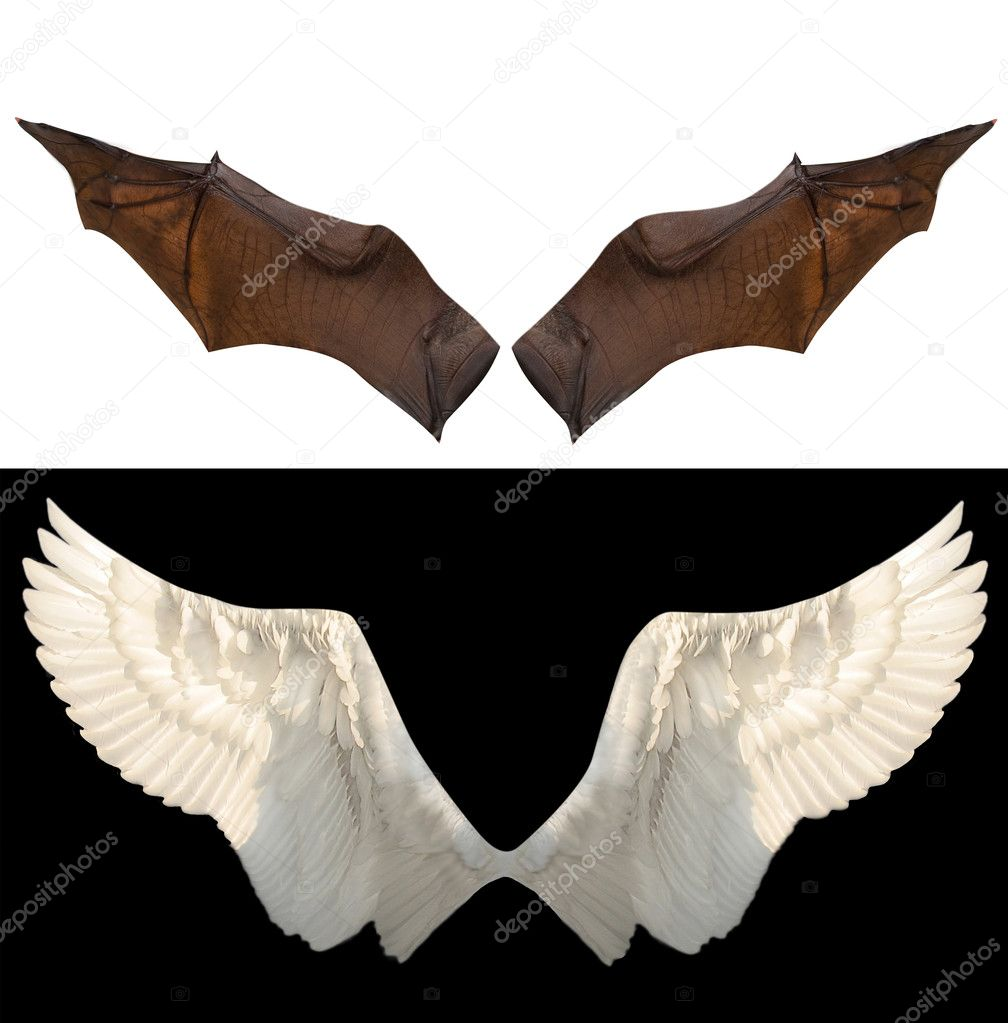 Two wings isolated  Stock Photo #2476017