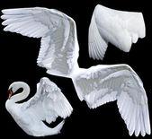 Flügel — Stockfoto