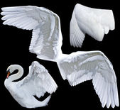 翅膀 — 图库照片