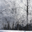 Branches of a tree in frost — Stock Photo #2652484