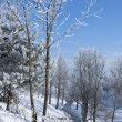 Stock Photo: Winter landscape with frost
