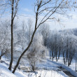 Winter landscape with frost — Stockfoto
