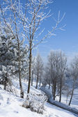 Winter landscape with frost — Стоковое фото