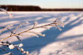 Frozen branch plant — Stock Photo