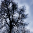 Gloomy tree — Stock Photo