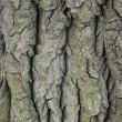 Bark - Stock Photo