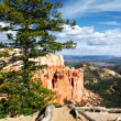 In Bryce canyon — Stock Photo