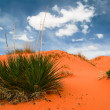 Coral Pink Sand Dunes — Stock Photo #1591768