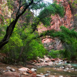 River in Zion Canyon — Stock Photo