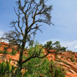 Stock Photo: In Zion Canyon