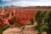 Le pendici del canyon bryce — Foto Stock