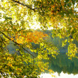 Autumnal  lake - Stock Photo