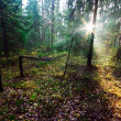 Sunshine forest — Stock Photo