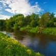 Stock Photo: Green field near river