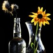 Stock Photo: Flowers in darkness