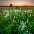 Sunset in the summer field — Stock Photo