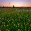 Green field — Stock Photo #1605705