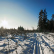 Winter landscape — Stock Photo
