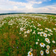 Stock Photo: Summer field