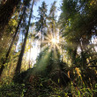 Stock Photo: Sunshine forest