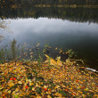 Autumnal lake — Foto Stock