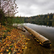 Autumnal lake — Stock Photo #1606137