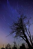 Звезда дорожки в ночь — Стоковое фото
