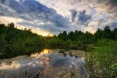 Summer lake — Stock Photo