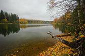 Autumnal lake — Stock Photo