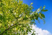 Krone der bäume — Stockfoto