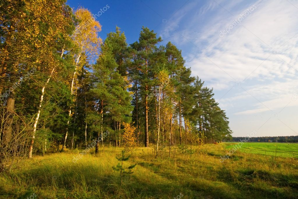 In sunny autumnal forest — Stock Photo #1606081