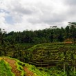 View of the rice terraces - Stock Photo
