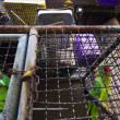 Parrots in the cage - Stock Photo