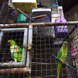 Parrots in the cage — Stock Photo