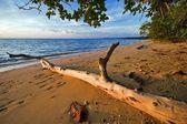 Am tropischen strand — Stockfoto