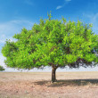 Three  green tree in torrid steppe - Stock Photo
