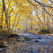 River in autumn forest — Stock Photo #1615831