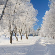 Stock Photo: Winter park in snow