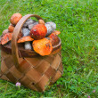 Basket on grass, full of fresh autumn mu - Stock Photo