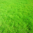 New spring green grass for design - Stock Photo