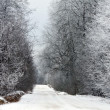 Road in winter forest — Stock Photo #1616392