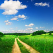 Beautiful summer landscape - Stock Photo