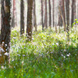 Spring morning in coniferous forest — Stock Photo #1616614