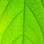 Fresh green foliage — Stock Photo #1616643