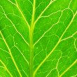 Green leaf — Stock Photo #1616661