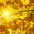 Autumn leaves and sun - Stock Photo